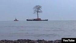 Вековое дерево везут по морю в дендропарк Иванишвили (архивное фото)