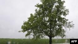 Збитки від повеней цього року сягають сотень мільйонів доларів