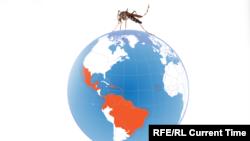 Буга чейин Дүйнөлүк саламаттыкты сактоо уюму 2016-жылы Түштүк, Борбордук жана Түндүк Америкада бул вирустан 3-4 миллион киши жабыркашы мүмкүндүгүн билдирген .