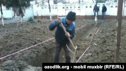 В школе №1 в Андижане строят парниковый лимонарий.