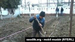 В школе №1 в Андижане строят лимонарий.