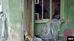 Донецк әуежайы маңындағы қираған үйлердің бірінде жүрген мысық.