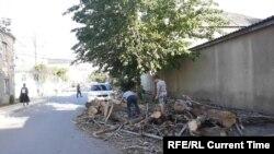 Вырубленные деревья на улицах Махачкалы