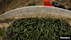 The German authorities had originally blamed Spanish cucumbers for the outbreak.