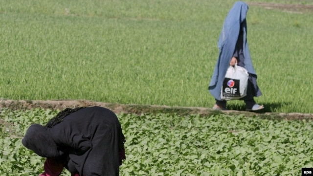 Under the law, Shi'ite women are not allowed to work without their husbands' permission