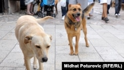 There are currently tens of thousands of stray dogs roaming the streets of the Romanian capital.