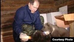 В Центр спасения к профессору Валентину Пажетнову привозят медвежат-сирот со всей России