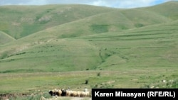Armenia - Sheep grazing on Urtsasar mountains, 22Jun2012.