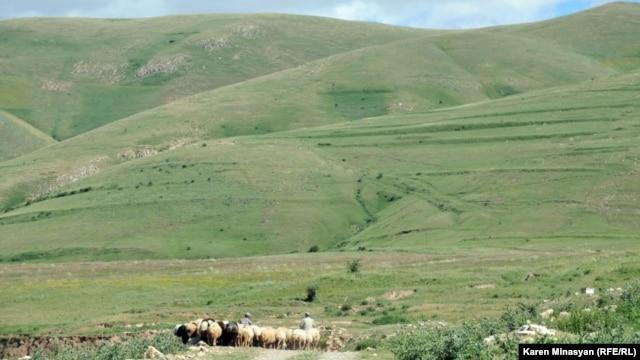 Armenia - Sheep grazing on Urtsasar mountains, 22Jun2012.