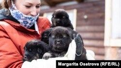 Спасенные щенки в Петрозаводске