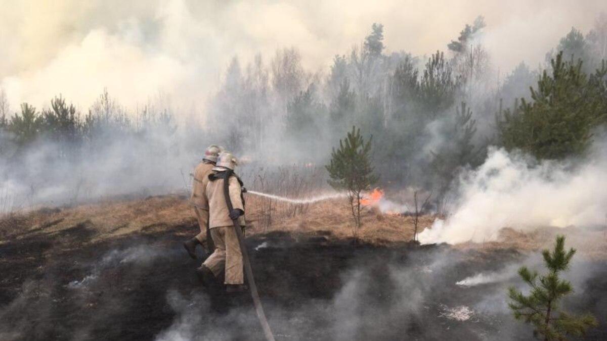 В Житомирской области задержали двух мужчин, которые вызвали лесной пожар