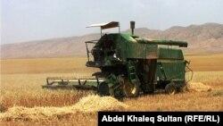 حصاد القمح في سمّيل غرب دهوك