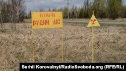 Рудий ліс в Чорнобильській зоні, 22 квітня 2015 року