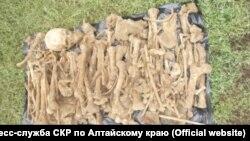 Останки, найденные на Алтае