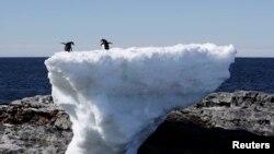 Пингвины на льдине в Антарктике.