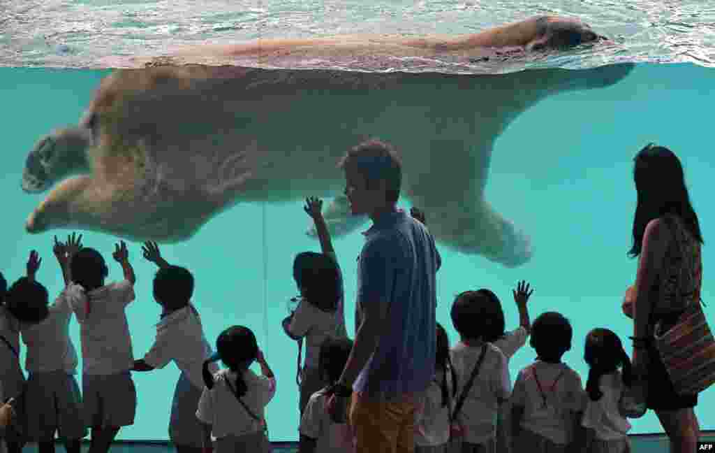 Schoolchildren watch as Inuka, a male polar bear, swims in its pool enclosure at the Singapore Zoo. The 22-year-old polar bear, the first one born in the tropics, moved into his new frozen-tundra home on May 29 in a 2,700-square-meter exhibit featuring climate-controlled resting areas and an expanded pool. (AFP/Roslan Rahman)