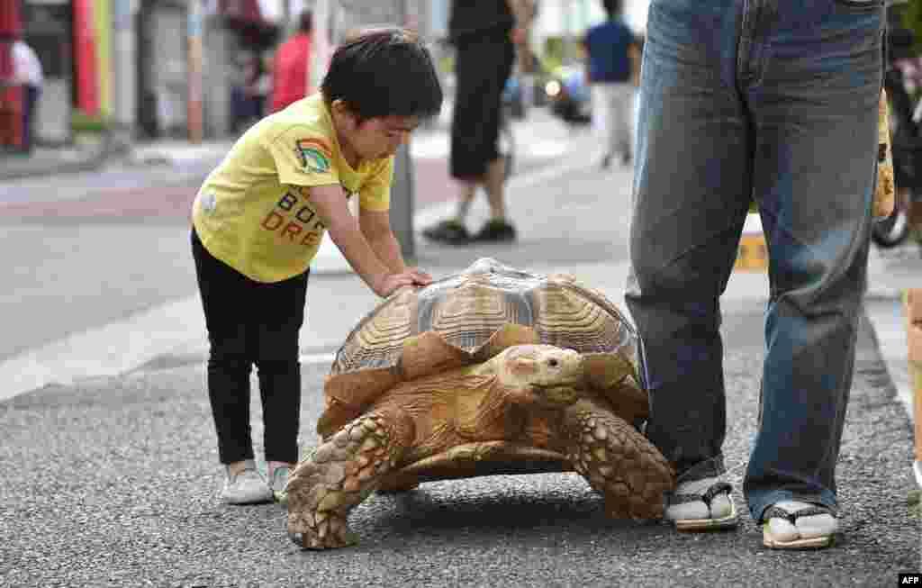 Местные жители любят играть с Бон-чаном