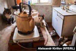 Коты – единственные соседи