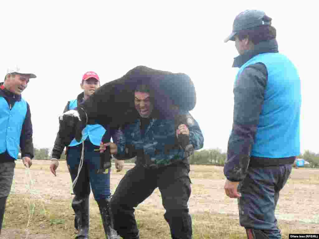 Қала күні мерекесінде қошқарды иыққа салып көтеруден жарыс өтті. Шымкент, 17 қазан 2015 жыл.