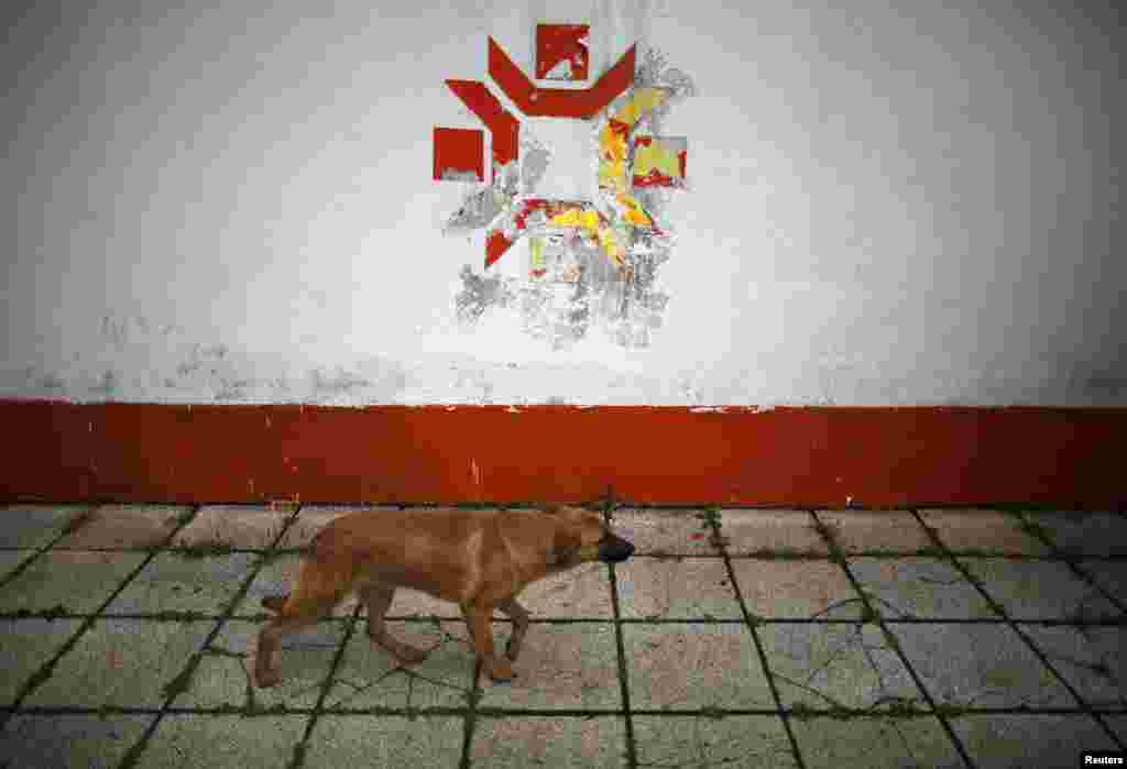 A dog walks past the Olympic snowflake logo on the wall of the Kosevo Stadium, the venue of the opening ceremony in 1984.