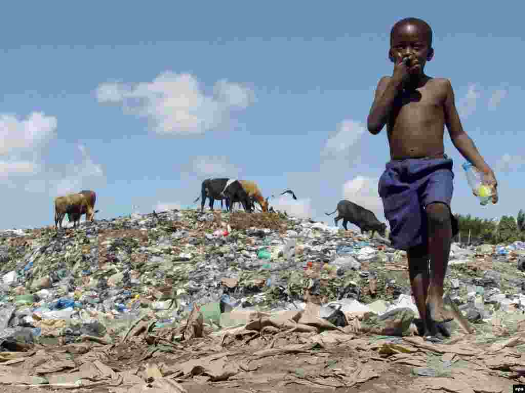 A boy grazes cattle at a dump in Dar es Salaam in August (epa) - The Stern report notes that the world's poorest countries will feel the effects of global warming first and most severely, and will have the fewest options for coping with them.