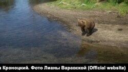 Медведь на берегу реки Хакыцин