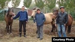 Мургабдагы кыргыз жылкысын өстүргөн фермада
