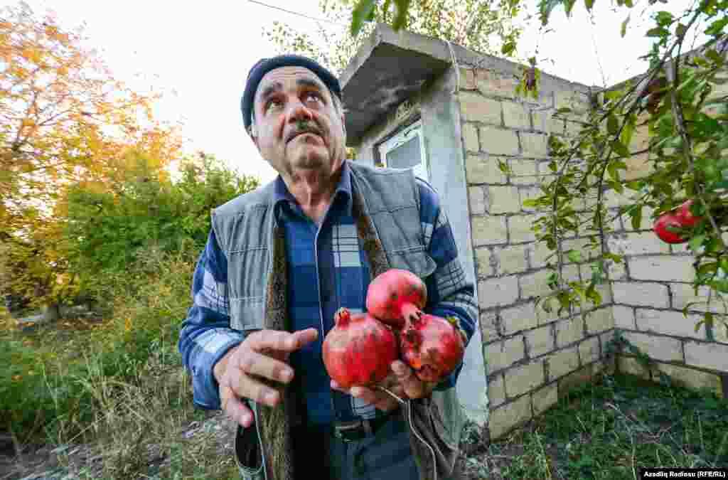 Выращенные подобным образом гранаты в январе можно продать по 10 манатов за килограмм (примерно шесть долларов).