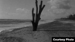 """Кадр из фильма Гранта Джи """"Терпение (вслед за Зебальдом)"""""""