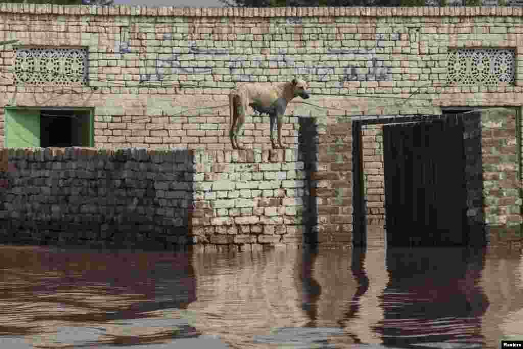 A flooded house in Jhang, Punjab Province