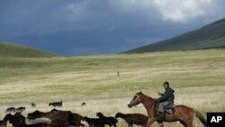 A farmer herds his sheep and goats Kyrgyystan's Suusamyr Valley