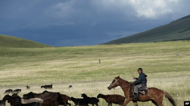 A farmer herds his sheep and goats Kyrgyystan's Suusamyr Valley