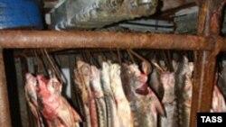 Каспийские осетровые породы рыб на грани исчезновения.