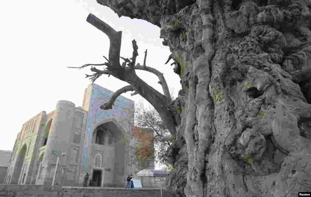 An ancient tree stands near a museum in the historical center of the Silk Road city.