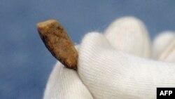 دندان کشف شده