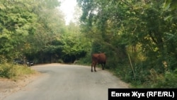 Корова свободно пасется у дороги