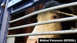 Sa prošlogodišnjeg protesta poljoprivrednika u centru Sarajeva, Fotografije uz tekst Midhat Poturović