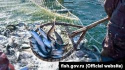 В Азовському морі рибу ловлять і українські і російські рибалки. Як вирішувати спірні питання з країною, яка окупувала Крим?