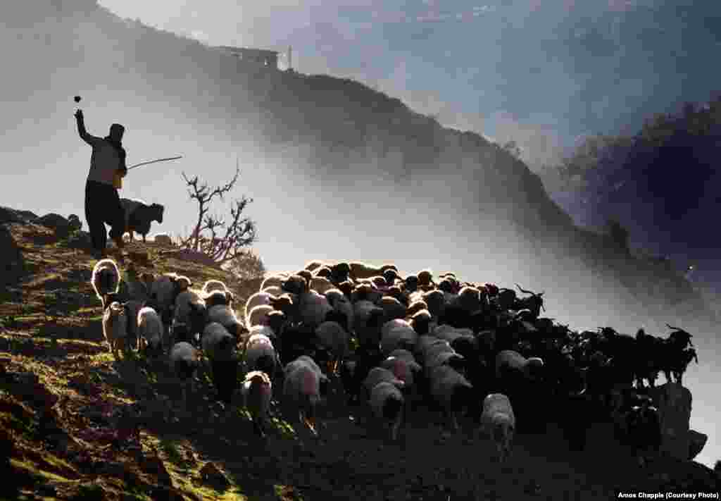 A shepherd leads his flock out to pasture in the mountains on the Iran-Iraq border.