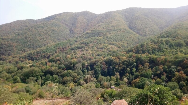 Armenia Introduces Tougher Penalties For Illegal Logging