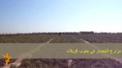 مزارع في كربلاء مهددة بالزوال الى الابد