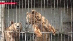 Зверинец, а не зоосад: все проблемы зоопарка в Душанбе