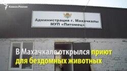 Махачкалинский приют для бездомных животных открыл свои двери