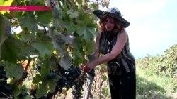 """В Грузии – сезон """"ртвели"""": страна собирает урожай винограда"""