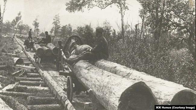 Вывозка леса по лежневой дороге