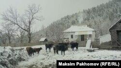 Фильм Максима Пахомова Photo: Maksim Pakhomov (RFE/RL)