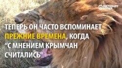 Крымский сафари-парк воюет за территорию с властями полуострова