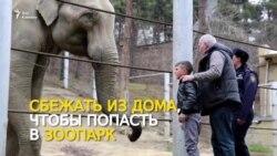 Зоопарк мечты