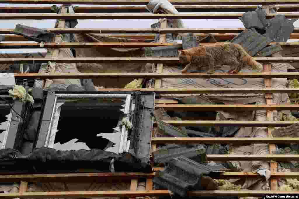 Кіт серед уламків на даху після торнадо, село Мікульчиці, 25 червня 2021 року