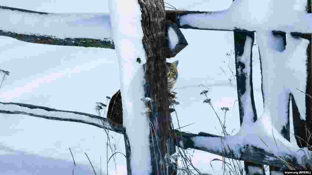 За перехожими в долині спостерігає дворовий кіт